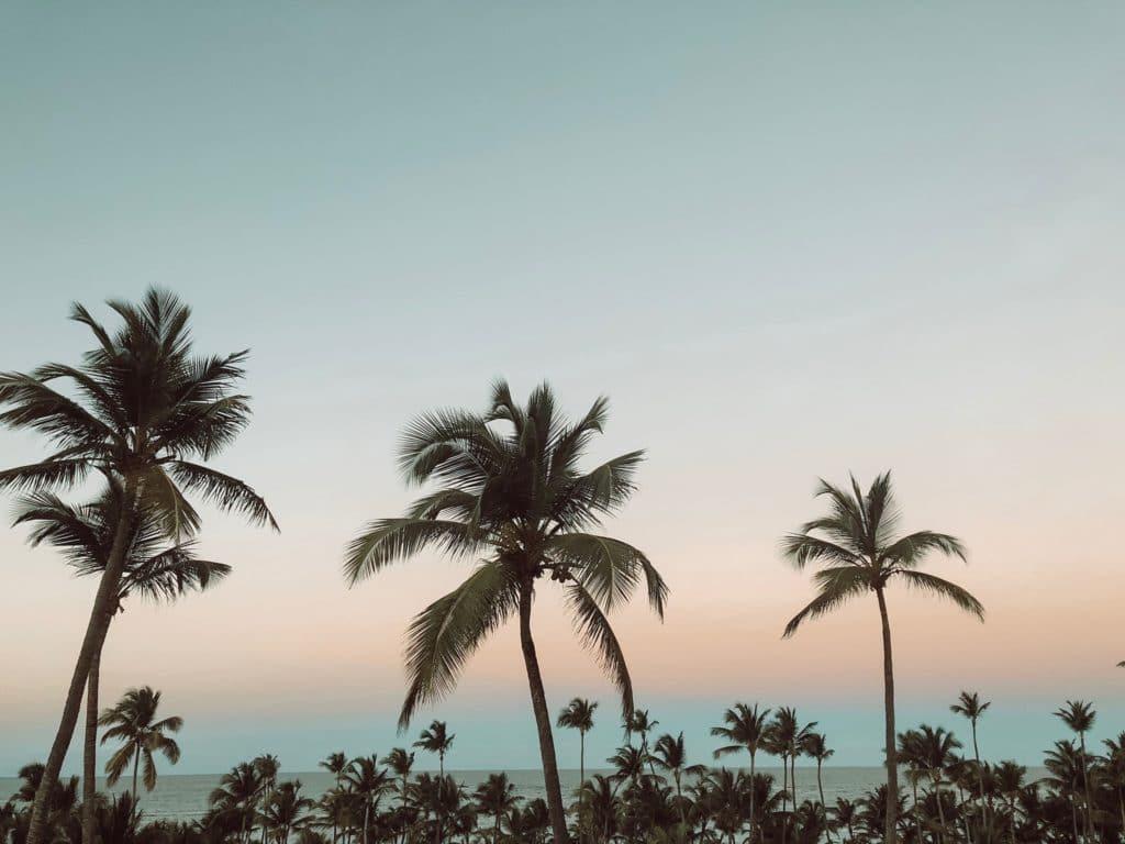 Palmen im Wind in Punta Cana