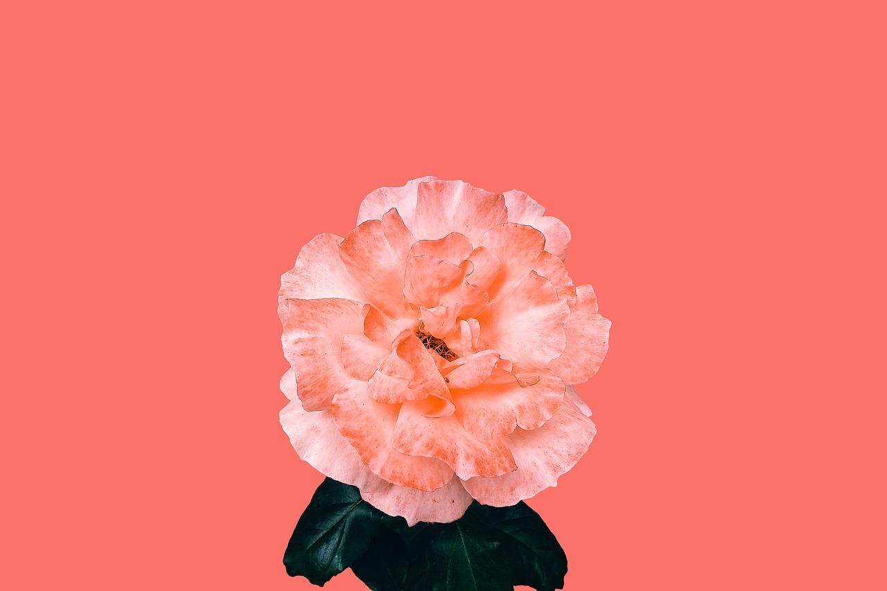Living Coral - Pantone Farbe des Jahres 2019 2