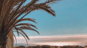 Gran Canaria - Urlaub das ganze Jahr 1